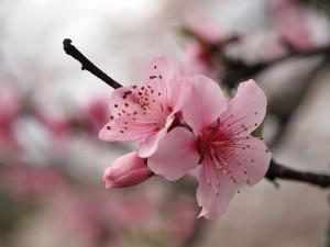 blossom.one